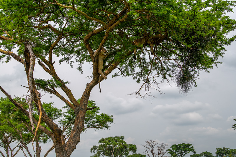 Uganda_T_QE-2051.jpg