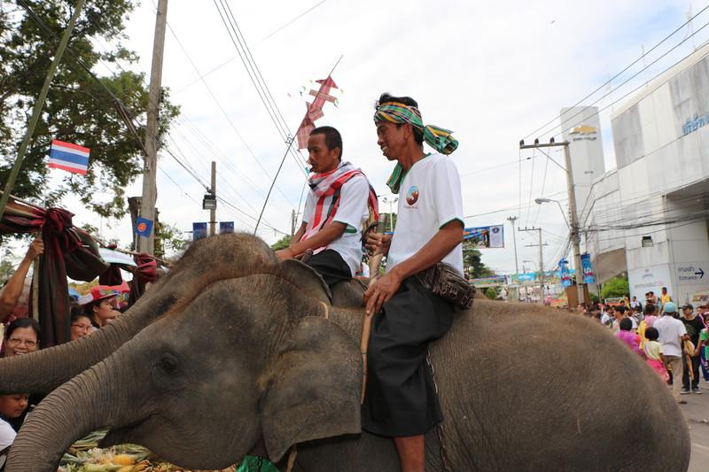 2014-11-14 Surin Elephant Welcome Feast 314.JPG