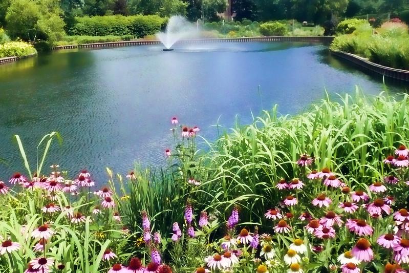 Lily pond Cantigny.jpg