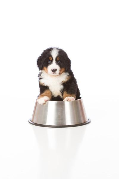 2013-Pearson Pups-Jun02-0353.jpg