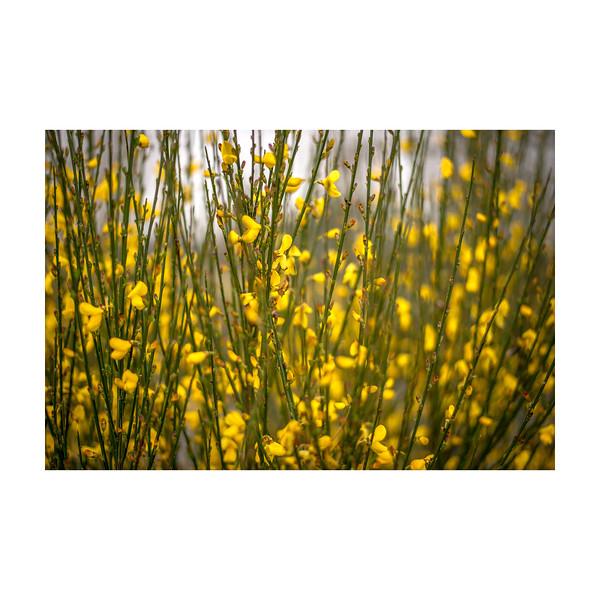 87_YellowPlant_10x10.jpg