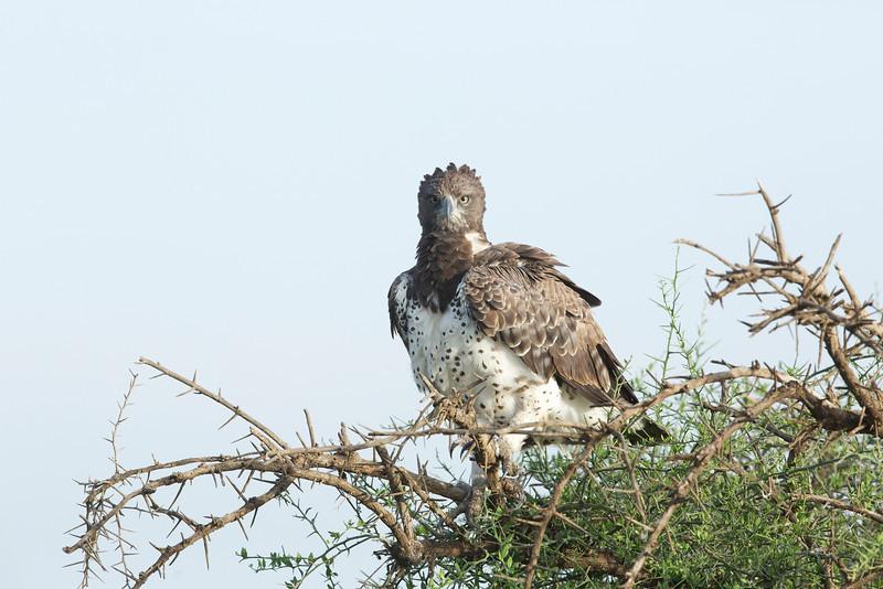 Serengeti_Feb_2013_IG3A1225.tiff.jpg