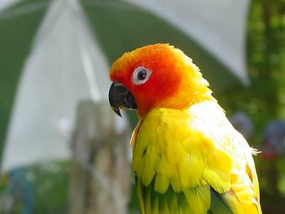 Terra Ceia Bay Birds & Animals