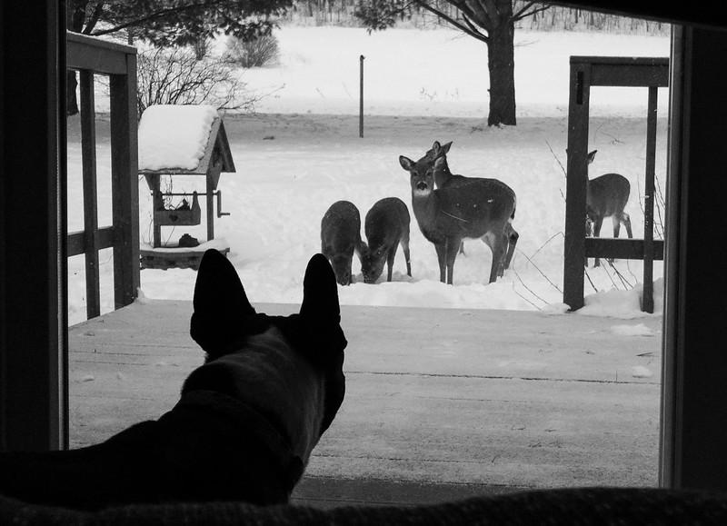 02-12-2020-deer_(1_of_4).jpg