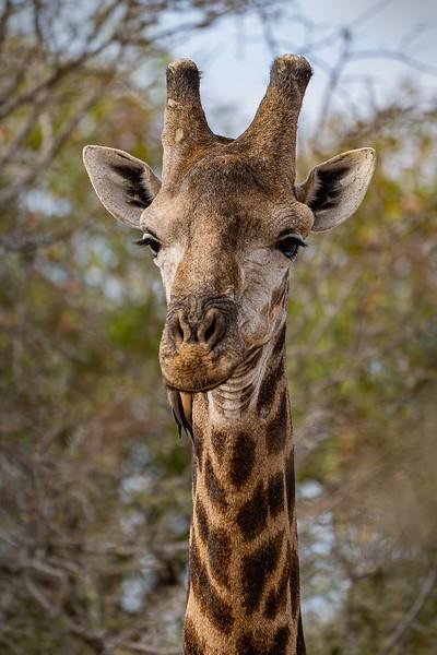 342 Krugeruntitled-4591-3.jpg