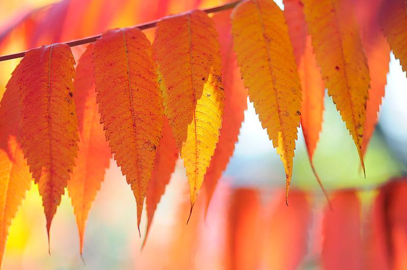 autumn-1a.jpg