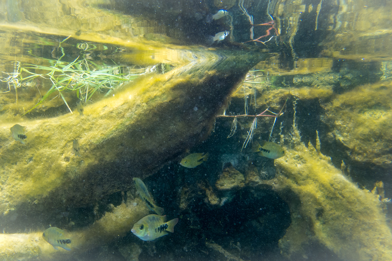 Clear Water and Beautiful Tropical Fish is the Main Attraction of Cenote Bacalar (Cenote Azul)