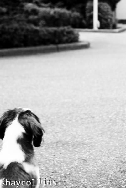 dogs_life.jpg