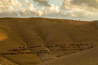 Wadi Qelt 1