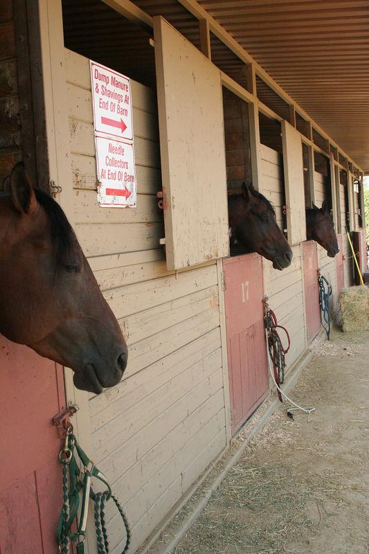 horse heads.jpg
