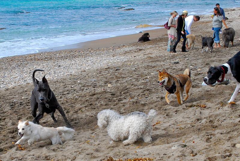 dogs_beach-049.jpg