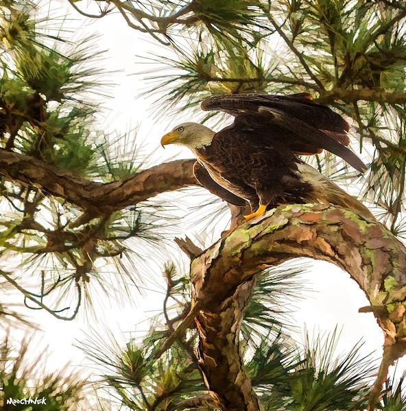 eagle123.jpg
