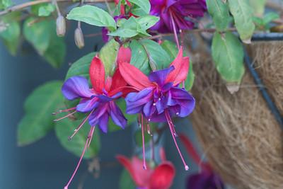 Flowers December 2010