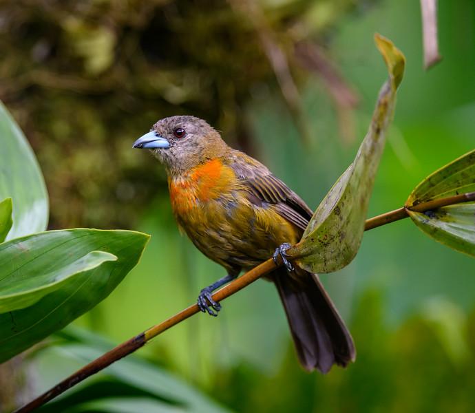 2018-07-21_12h06m31s_850_8460_Costa Rica.jpg