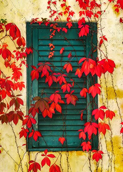 Winery-Window-and-Fall-Leaves.jpg