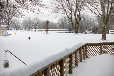 20210215 Birds and Snow