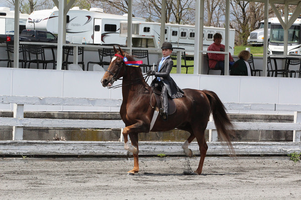 097 Open English-Western Pleasure Walk-Trot Only Horse or Pony Championship
