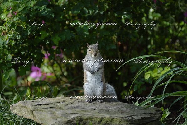 Sam the Squirrel