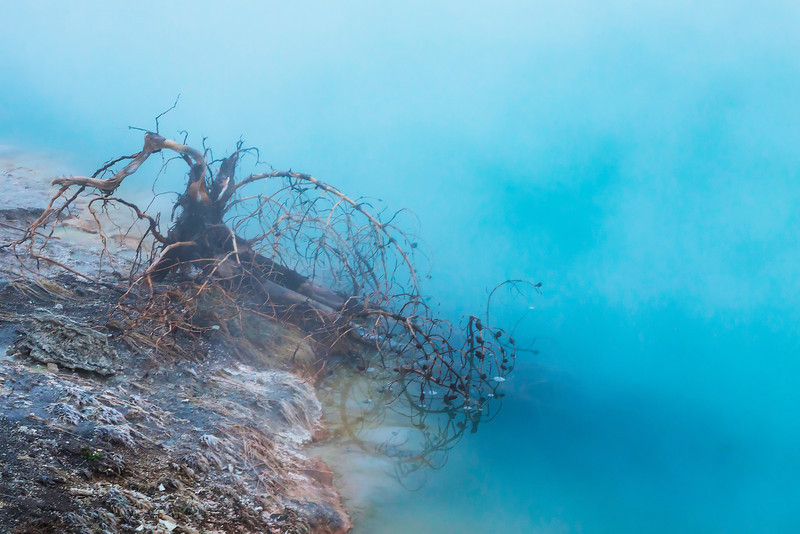 Wreck of the Ghost Pine.jpg