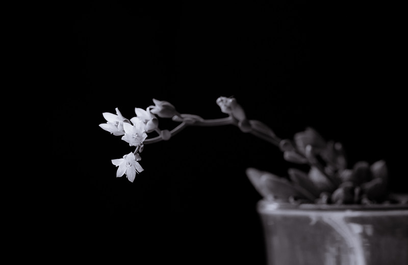 succulent flowers-7812.jpg