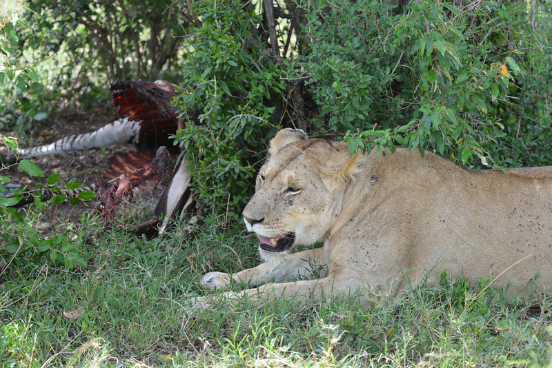 East Africa Safari 223.jpg
