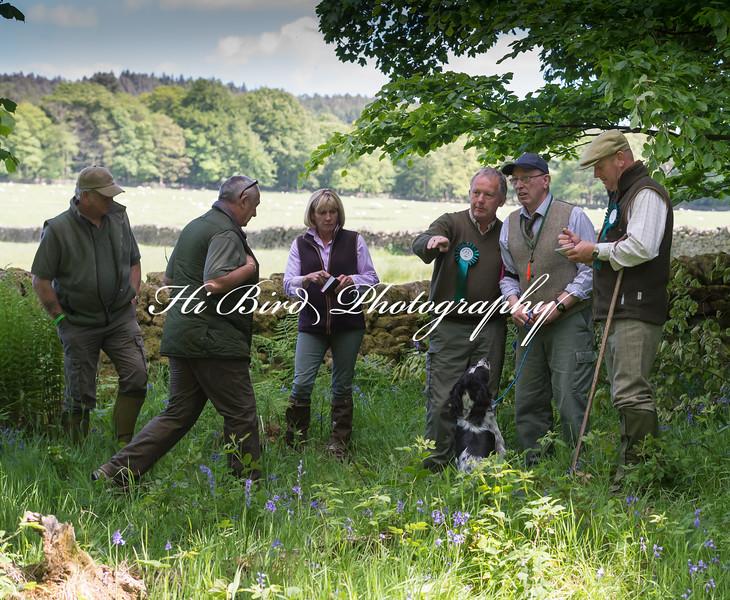 KC Spaniel Open Run off HBTP-7.jpg