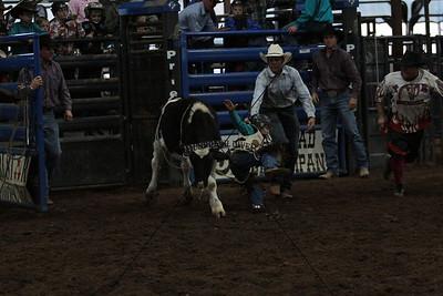 Calves Steers and Bulls