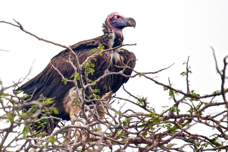 Kenya.Card3.02.2014 215