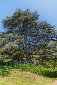 Kirstenbosch National Botanical_2103