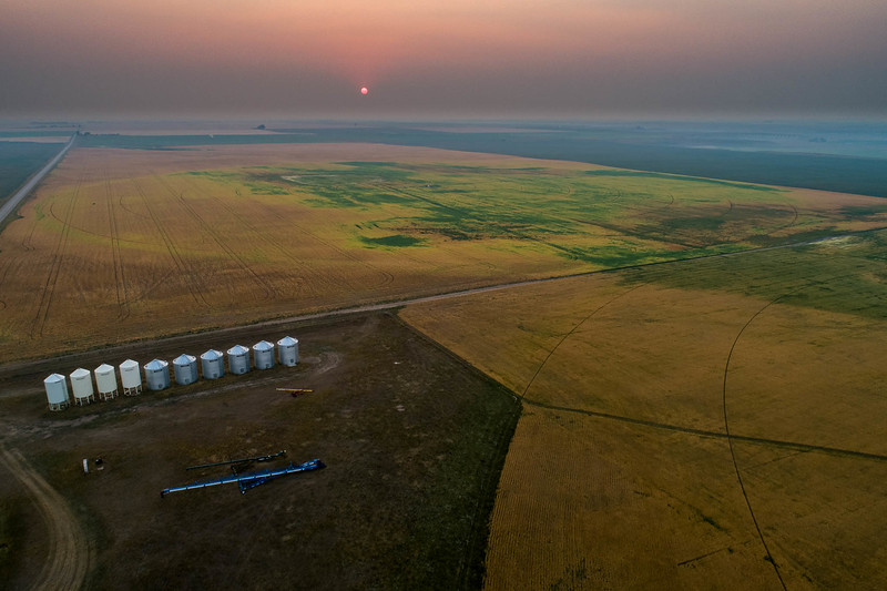 barley 44.jpg