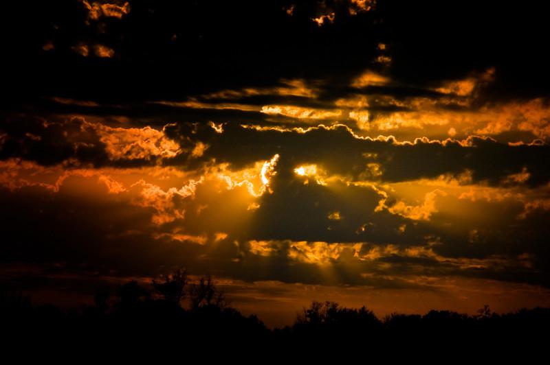 Sunny delight  - Copy.jpg