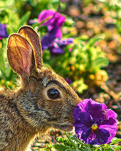 Rabbits & Squirrels