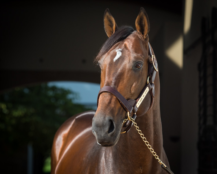 To Honor And Serve at Gainesway Farm 8.15.14
