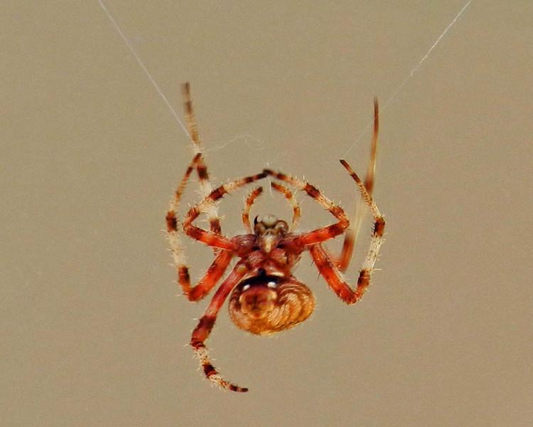 Over the door spider under.jpg