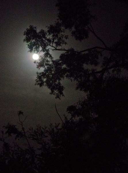 full moon in Wombarra, also from Caro & David's garden
