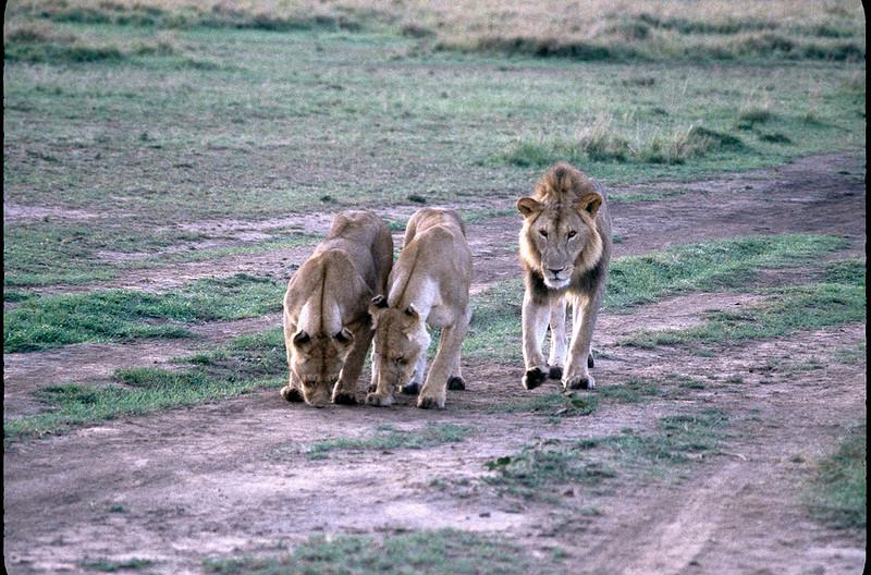 Kenya2_024.jpg