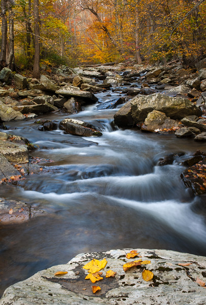 Hunting Creek and Fall Colors Eleven.jpg