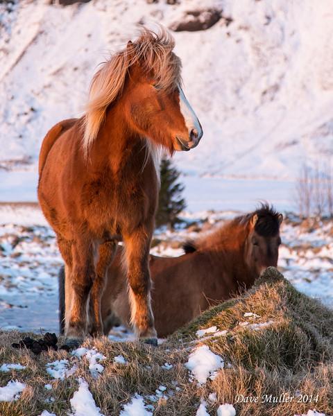 Iceland in Winter MKIII-20140222-0072.jpg