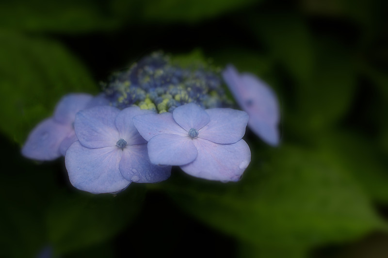 A soft focus take on these flowers.