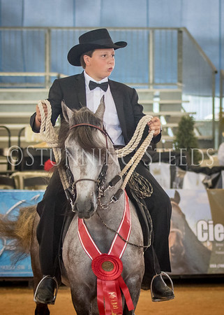 284-Fino Amateur Geldings and Colts 3 Years