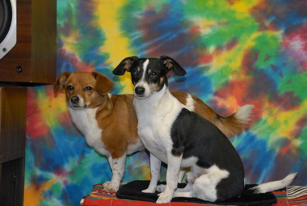 2010-01-03 Tie-Dye Dogs