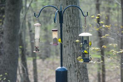 Bird 4-29-17