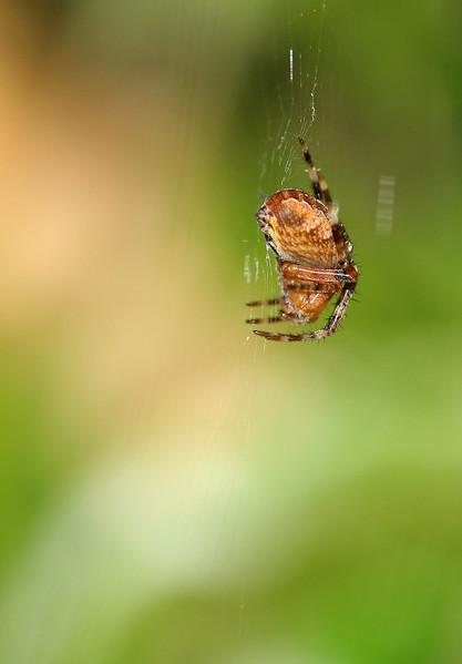 0927 Spider.jpg