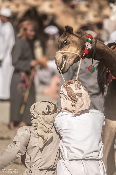 camel  (29)- Camel Race.jpg