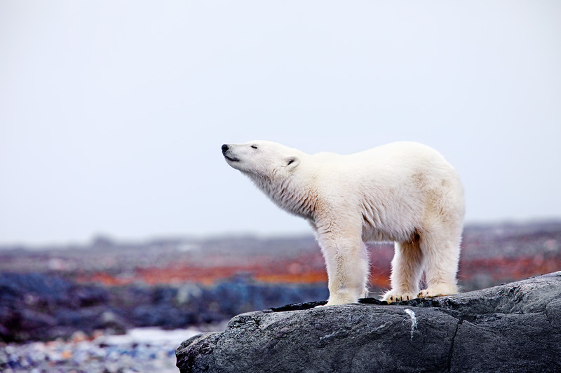 Svalbard-7863.jpg
