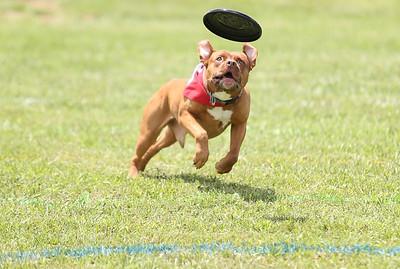 Flying Frisbee Fest 2013