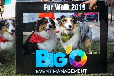 Fur Walk - 2019