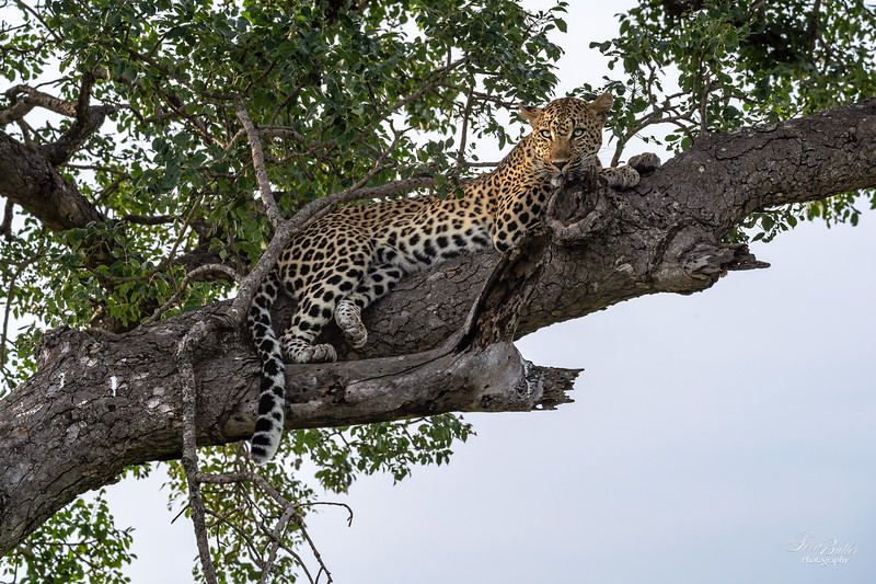 Thornybush22pm_1885.jpg