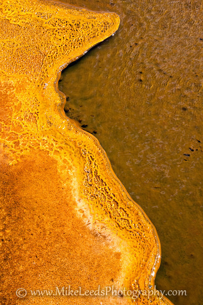 Brightly colored Algae in the Hot Pools in Yellowstone National Park, Montana.