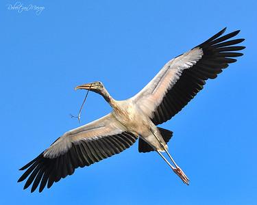 Florida Birds   (A  personal favorite)